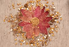 Free Autumn Bounty Royalty Free Stock Photos - 3445358