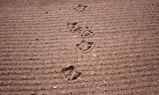 Free Bird Foot Print Path Stock Images - 3445534