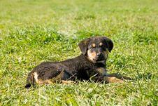 Free Kinder Dog. Stock Image - 3445931