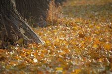 Free Fallen Leaves In Autumn Stock Images - 3447124