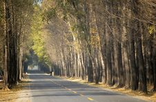 Free Country Road In Autumn Stock Photo - 3447150