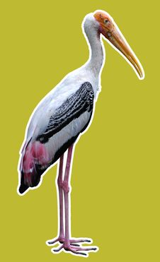 Free The Stork. Royalty Free Stock Photos - 3447888