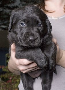 Free Puppy Stock Photo - 3449790