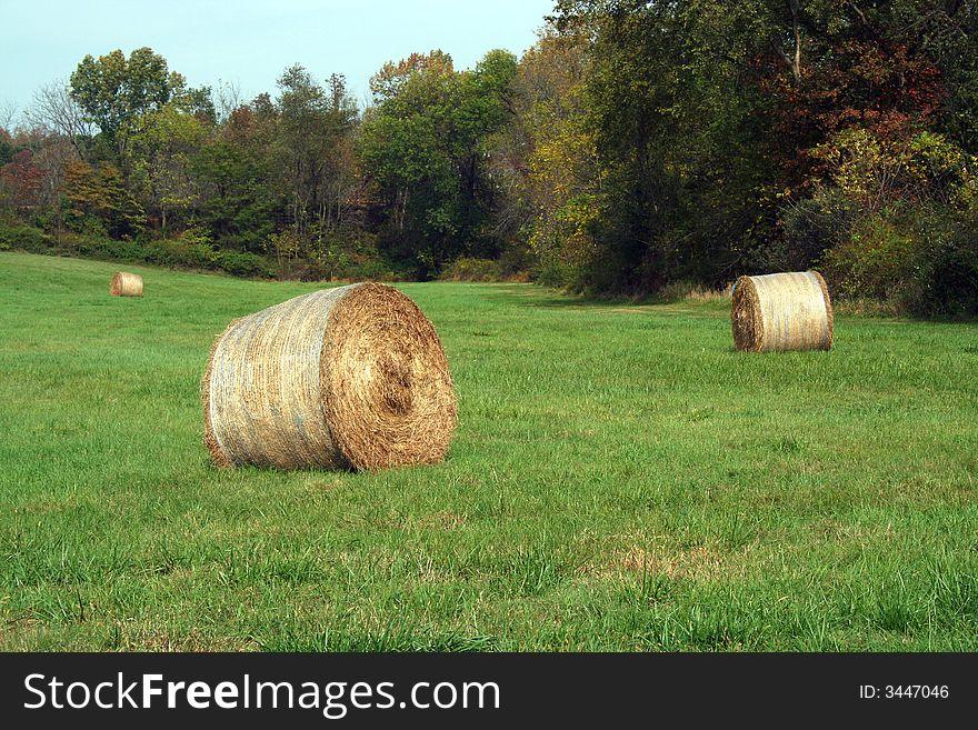 Hay Rolls in a green field