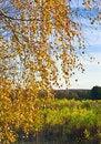 Free Autumn Royalty Free Stock Photo - 34405495