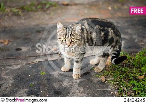 Free Cat Royalty Free Stock Photo - 34404245