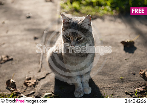 Free Cat In Evening Light Royalty Free Stock Image - 34404266