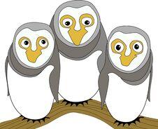 Free Funny Owl Family Royalty Free Stock Photography - 34407807