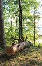Free Fallen Tree Stock Image - 34416601
