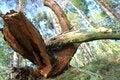 Free Fallen Tree Stock Image - 34416631