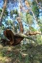 Free Fallen Tree Stock Photography - 34416642