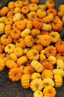 Free Orange Pumpkins. Stock Photography - 34411472