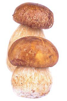 Free Porcini Mushroom Stock Photography - 34411922