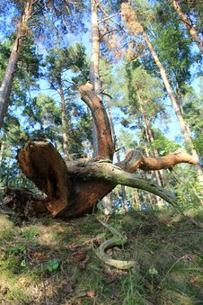 Free Fallen Tree Stock Photography - 34416642