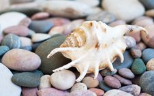 Free Beach Stones Royalty Free Stock Images - 34446699