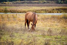 Free Horse Royalty Free Stock Images - 34464339