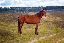 Free Horse Royalty Free Stock Image - 34465696