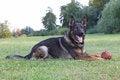 Free German Shepherd Dog Royalty Free Stock Photos - 34471628