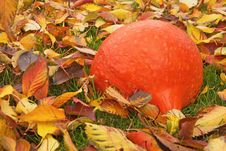 Free Pumpkin On Fallen Colorful Leaves. Royalty Free Stock Photos - 34470268