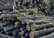 Free Chopped Trees - Deforestation Stock Images - 34471564