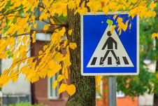 Free Road Sign Crosswalk In The Yellow Leaves Royalty Free Stock Photo - 34472575