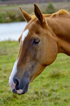 Free 2014 Year Of The Horse Royalty Free Stock Photos - 34475588