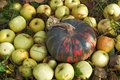 Free Pumpkin And Apples On The Grass In The Autumn Garden Royalty Free Stock Photography - 34483367