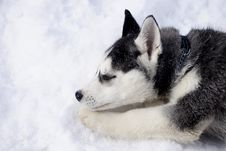 Sleeping On Snow Royalty Free Stock Image