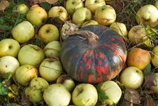 Pumpkin And Apples On The Grass In The Autumn Garden Royalty Free Stock Photography