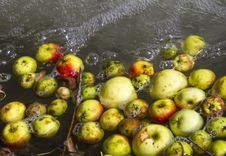 Apples Floating On Water Stock Photography