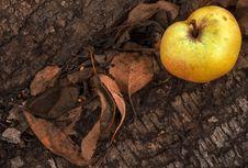 Free Apple On Autumn Background Royalty Free Stock Photo - 34485665