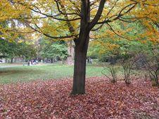 Free Tree In Autumn Stock Photos - 3450753