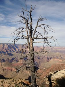Free The Tree In Grand Canyon Royalty Free Stock Images - 3450979