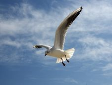 Free The Seagull Stock Image - 3451081