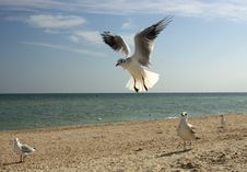 Free The Seagull Stock Image - 3451191
