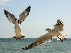 Free The Seagull Royalty Free Stock Image - 3451216