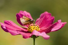 Free Butterfly On The Flower Stock Photos - 3452393