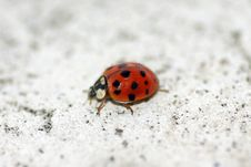 Free Ladybug Stock Images - 3453224