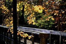 Board Walk In Autumn Stock Photography