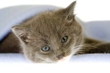 Grey Kitten On A Blanket Royalty Free Stock Photos