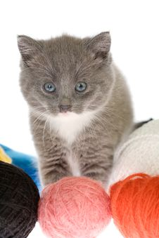 Free Grey Kitten And Yarns Stock Photography - 3454432