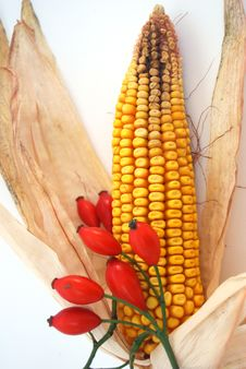 Corn With Rose Hip Royalty Free Stock Photography