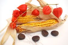 Detail Corn And Chestnut Stock Images