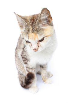 Free Cat Stock Photography - 3456042
