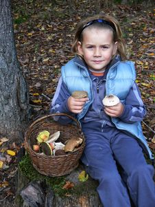 Small Boy Showing Mushrooms Stock Photos