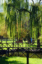 Free Weeping Willow In The Park Royalty Free Stock Photos - 34512468