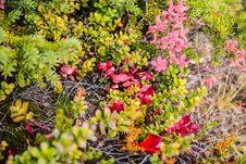 Free Utter Tundra Royalty Free Stock Image - 34514216