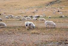Flock Fall Royalty Free Stock Photos