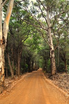 Free Road Through Forest In Western Australia Stock Photography - 34517742