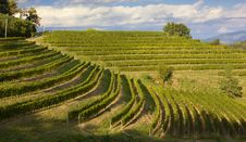 Free Vineyards On A Summer Afternoon Royalty Free Stock Image - 34517746